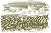 Woodcut Farm Fields