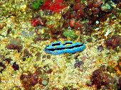 Sea slugs of the Philippine sea