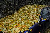 picture of transpiration  - abandoned car completely covered with autumn leaves - JPG