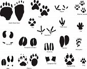 image of paw-print  - Biggest collection of animal and bird trails with title - JPG