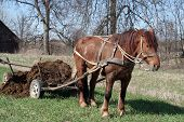 stock photo of workhorses  - Workhorse during springtime works - JPG