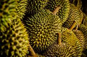 foto of fruits  - This is a photo for the Durian fruit, which is also called the King Fruit. 