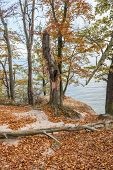 image of polonia  - Autumnal trees on Kepa Redlowska cliff - JPG