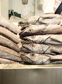 picture of hake  - Hakes in a market fished in seabed - JPG