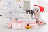 pic of christmas dog  - Cat and cute little dog Maltese sitting with gifts near Christmas tree wearing Santa Claus hat  - JPG