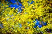 foto of vegetation  - Forest Spring Vegetation - JPG