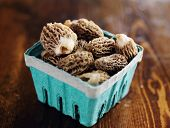 foto of morel mushroom  - freshly picked morel mushrooms in basket - JPG