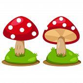 image of magical-mushroom  - Illustrator of red mushrooms natural cartoon isolated - JPG