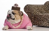 picture of dog clothes  - female dog  - JPG