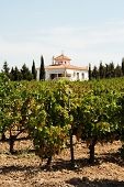 image of farmhouse  - View across a Spanish vineyard with a farmhouse to the rear Montilla Cordoba Province Andalusia Spain Western Europe - JPG