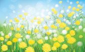 stock photo of dandelion  - White and yellow dandelions flowers on blue bokeh sky background - JPG