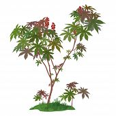 picture of laxatives  - Castor Plant with Leaves - JPG