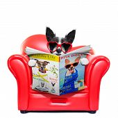 stock photo of couch potato  - terrier dog reading magazine and tabloids on a red sofa couch or lounger in living room isolated on white background - JPG