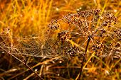 picture of cobweb  - Cobweb covered in dew drops at meadow in a sunny morning - JPG