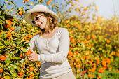 pic of mandarin orange  - Smiling caucasian girl in white tshort and hat harvesting mandarins and oranges in organic farm - JPG