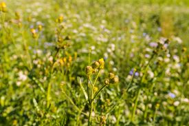 stock photo of biodiversity  - Closeup of a multicolored border with wild flowers and plants next to a field - JPG