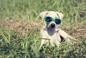 Dog Sunglasses Canine Breed Pet Greeting poster