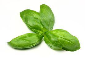 pic of basil leaves  - sprig of fresh basil - JPG