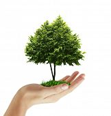 image of planting trees  - hand plant  - JPG