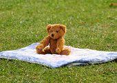 picture of teddy-bear  - a cute teddy bear relaxing in the park  - JPG