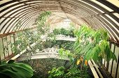 foto of canopy roof  - Inside the roof space of a greenhouse - JPG