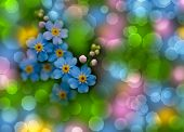Forget-me-not With Bokeh