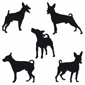 pic of miniature pinscher  - Five Miniature Pinscher black silhouettes - JPG