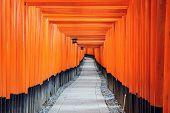 stock photo of inari  - Fushimi Inari Taisha Shrine torii gates in Kyoto - JPG
