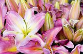 picture of flower shop  - Flower stand at Pike Place market - JPG