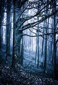 foto of scary  - Moody landscape with scary forest at night - JPG
