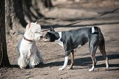 stock photo of dog park  - two dogs talk on the walk in a park - JPG