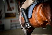 stock photo of stud  - Horse riding - JPG