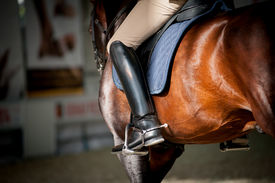 picture of horse girl  - Horse riding - JPG