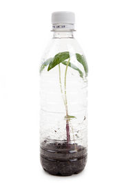 picture of plastic bottle  - plastic bottle and Sprout with white background - JPG