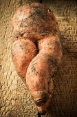 picture of root-crops  - Funny ripe carrot intertwined root for background - JPG