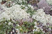 foto of lichenes  - Beautiful background image of lichen and moss - JPG