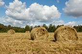 image of haystacks  - Haystacks in the field - JPG