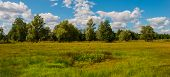 stock photo of steppes  - rural landscape in the forest - JPG