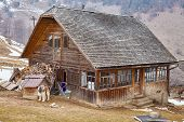 picture of wooden shack  - Countryside landscape with traditional wooden house guarded by carpathian shepherd dog - JPG