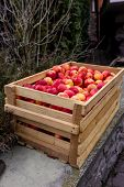 stock photo of wooden crate  - Freshly picked red apples in big wooden crate - JPG