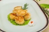 picture of scallops  - Grilled scallops in the bowl with herbs - JPG