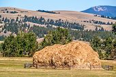 stock photo of yesteryear  - Hay that has been stacked by a beaverslide using horses and manual labor - JPG