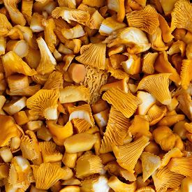 picture of chanterelle mushroom  - Sliced mushrooms chanterelle mushroom for meal preparation - JPG