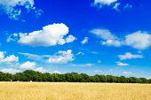 stock photo of clouds sky  - The yellow field and clouds in the sky - JPG