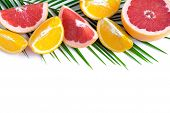 The Basis For The Banner With Palm Leaf And Fruit. Grepfruit, Orange, Palm Leaf With Space For Copis poster