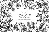 Spice_plants_4_4 poster