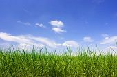 Background - blue sky and green grass