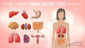 Cartoon Human Anatomy Bright Template With Woman Body Liver Stomach Heart Brain Lungs Kidneys Spleen poster
