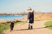 Small Child Is Walking A Labrador Retriever Puppy. Kid And Labrador Retriever Dog For A Walk. Best F poster