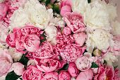 Peonies Wallpaper Pattern. Big Stylish Pink And White Peony Bouquet Close Up. Happy Mothers Day. Val poster